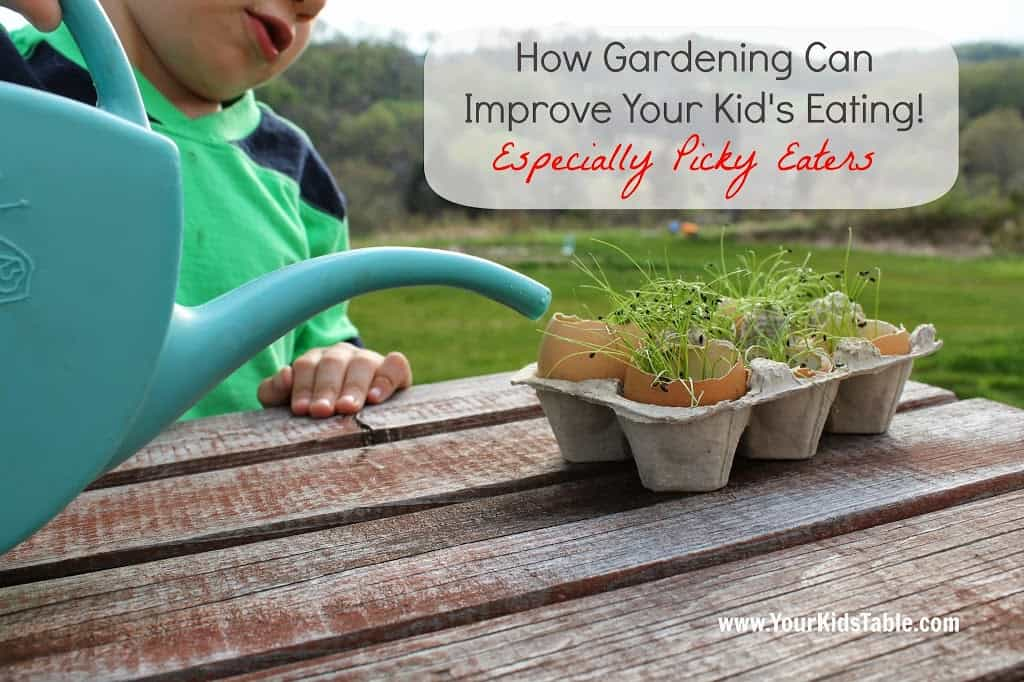 Gardening can be an amazing strategy for picky eaters and it can be done very simply! Learn why and how to set it up so your child tries new foods